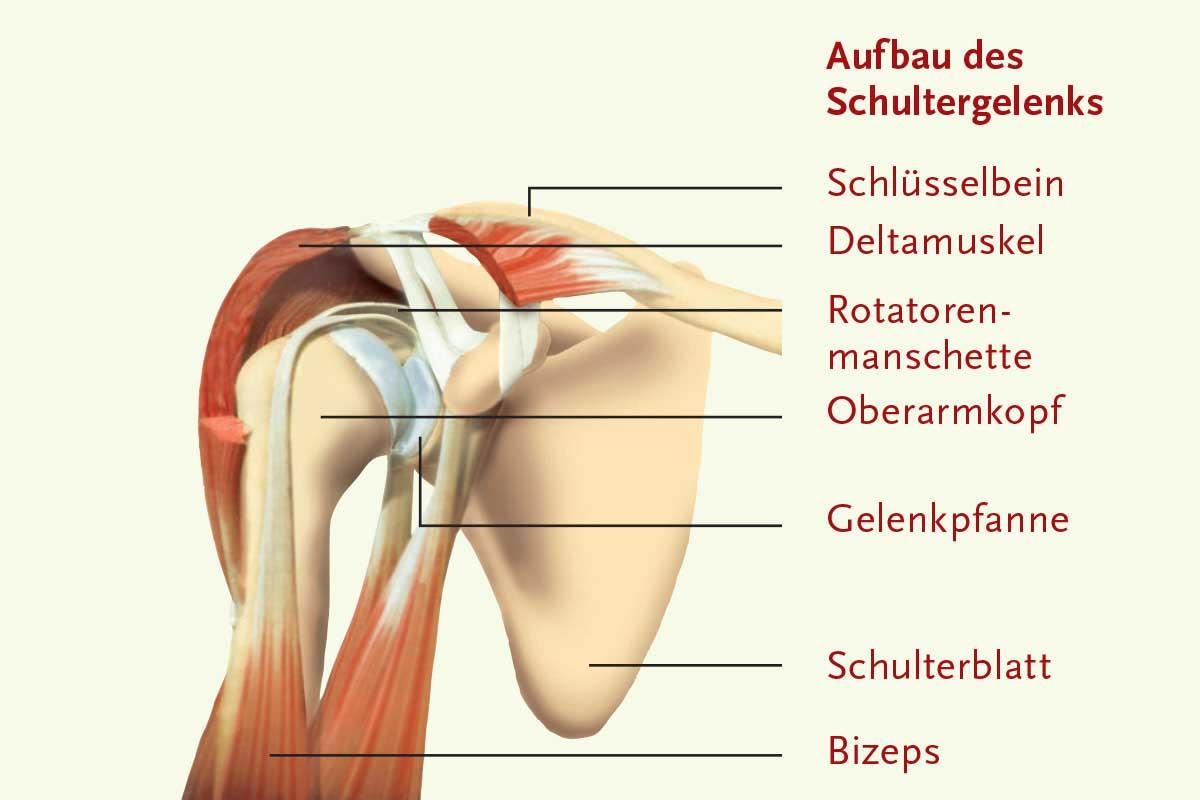 Beste Gelenkpfanne Anatomie Ideen - Menschliche Anatomie Bilder ...
